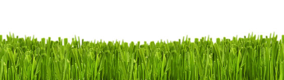 Grass green Stock Photos