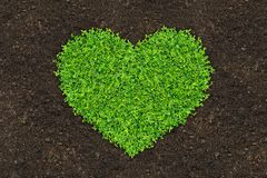Grass and green. Plants growing a heart shape on soil manure in the birds eye view stock images
