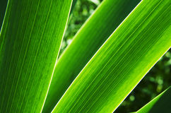 Grass1 Royalty Free Stock Photo