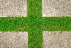 Grass green background Stock Images