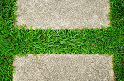 Grass green background Royalty Free Stock Photography