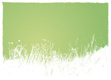 Grass on green background. Stock Image