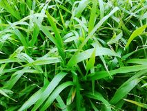 Grass. Green grass background Stock Image