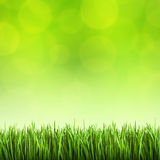 Grass on the green background Stock Photography