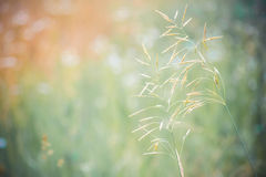 Grass on the green background blur Royalty Free Stock Photography