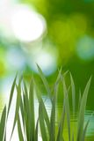 Grass on green background. Closeup Stock Photography