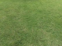 Grass. Green grass background of nature view Stock Photo