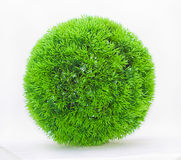 Grass green ball. A green ball of grass Royalty Free Stock Images