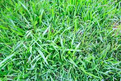 Grass. Green grass ,be used as background image Royalty Free Stock Photography