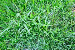 Grass. Green grass ,be used as background image Stock Photography