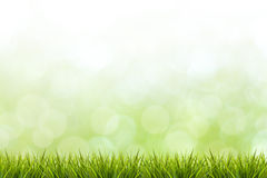 Grass and green blurred background Stock Photo