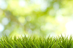 Grass and green blurred background Stock Photos