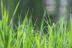 In the grass. Green grass and blurry background Stock Photo