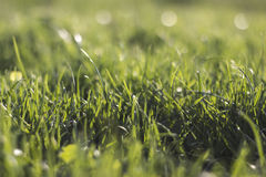 Grass background in daylight Royalty Free Stock Photos