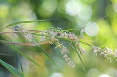 Grass with Green bubble bokeh Royalty Free Stock Images