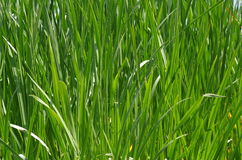 Grass Stock Image