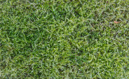 Grass green Stock Images