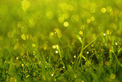 Grass. Green dewy grass background in meadow Royalty Free Stock Photography