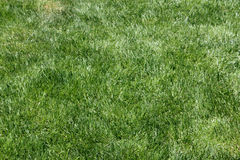 Grass. Green grass on a field as background Stock Image