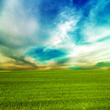 Grass green field and blue sky. Landscape with grass green field and blue sky Royalty Free Stock Photography