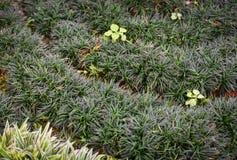 Grass green floor decoration Royalty Free Stock Photo