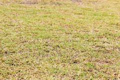 Grass green football field. Photo royalty free stock image