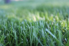 Grass green frash summer warm stock photo