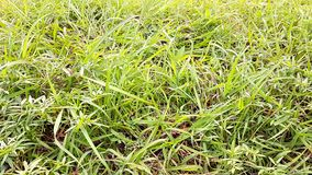 Grass. Green grass of front field of airport thailand stock photo