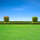 Grass. Green grass in a garden on blue sky Stock Image