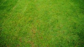 Grass. Green grass ground in park Stock Photo