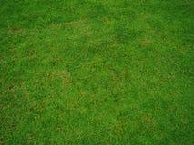 Grass. Green grass ground in park Stock Photos