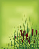 Grass in the green land. Group of browny flower between the grass, natural scene Royalty Free Stock Photo