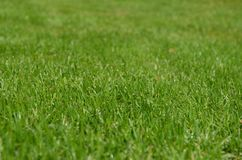 Grass, Green, Lawn, Grassland Royalty Free Stock Images