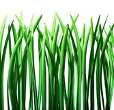 Grass green lawn isolated Royalty Free Stock Image