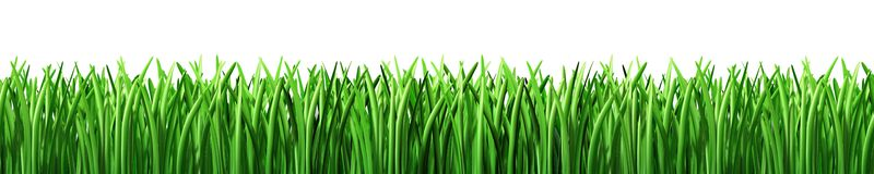 Grass green lawn isolated. Green grass lawn isolated on white Stock Photography