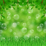 Grass,green leaves and soap bubbles Stock Image