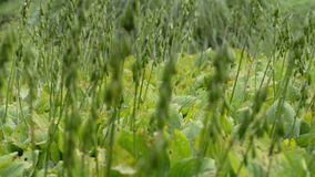 Grass with green leaves stock video footage