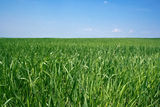 Grass on green meadow against the blue sky Stock Image