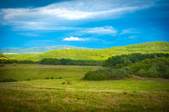 Grass on green meadow. And blue sky with clouds Stock Images