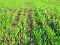 Grass green meadow landscape Stock Photos