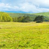 Grass on green meadow Stock Photography