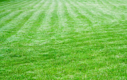 Grass green mower Stock Photo