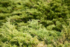 Grassy green blurred background Royalty Free Stock Photos