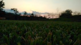 Grass Royalty Free Stock Photo