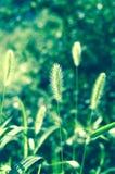 Grass. Green nature relax green environment Royalty Free Stock Photos