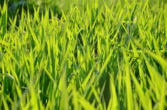 Grass. Green grass in the park Stock Photo