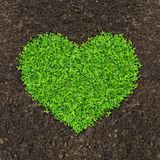 Grass and green plants. Growing a heart shape on soil manure in the birds eye view royalty free stock images