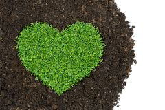 Grass and green plants. Growing a heart shape on soil manure in the birds eye view stock photography
