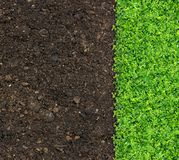Grass and green plants. Growing on soil manure stock photography