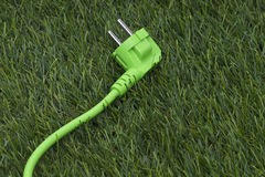 Grass with green plug Royalty Free Stock Photography